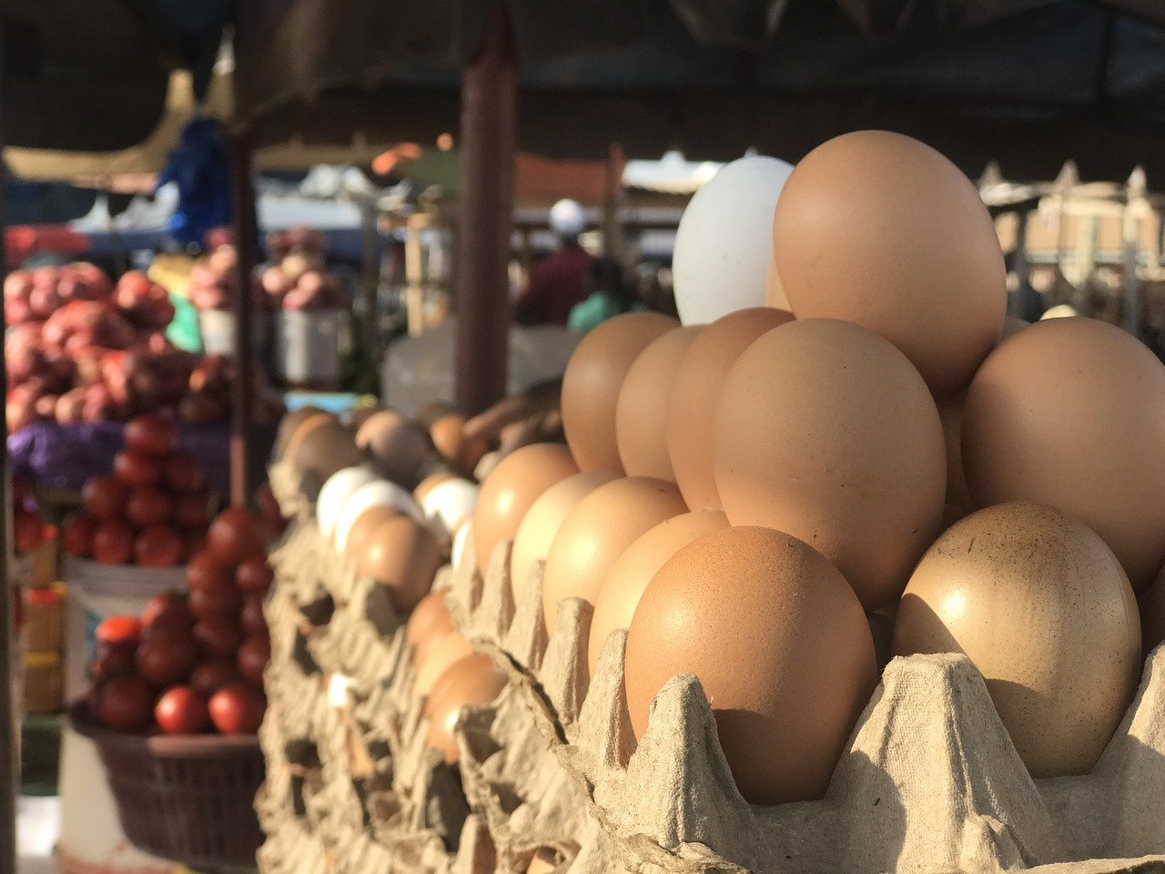 Guide to Egg Distribution Business with low Capital