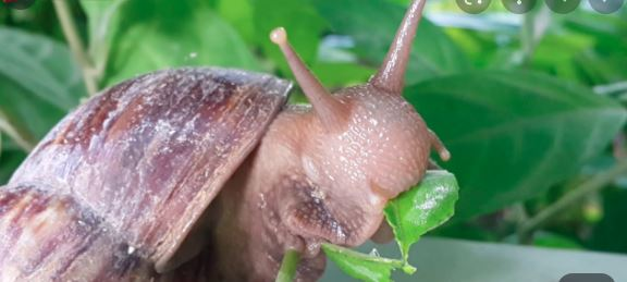 How to Feed your snail