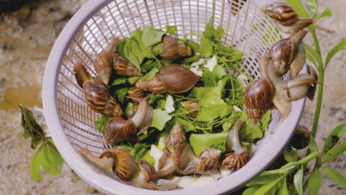 sources of feeds for snail How to Start a Profitable Snail Farming Business in Nigeria this 2021